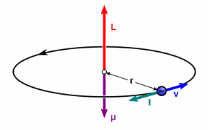 The magnetic moment in terms of angular momentum